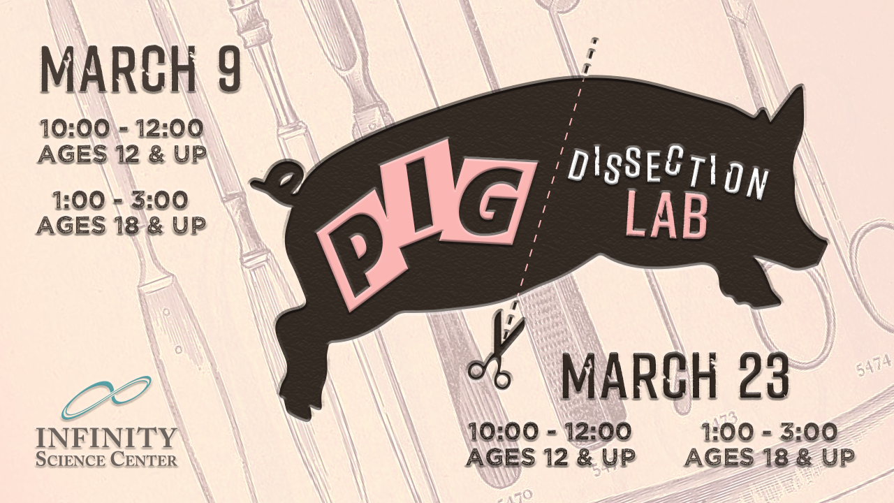 Pig Dissection Lab