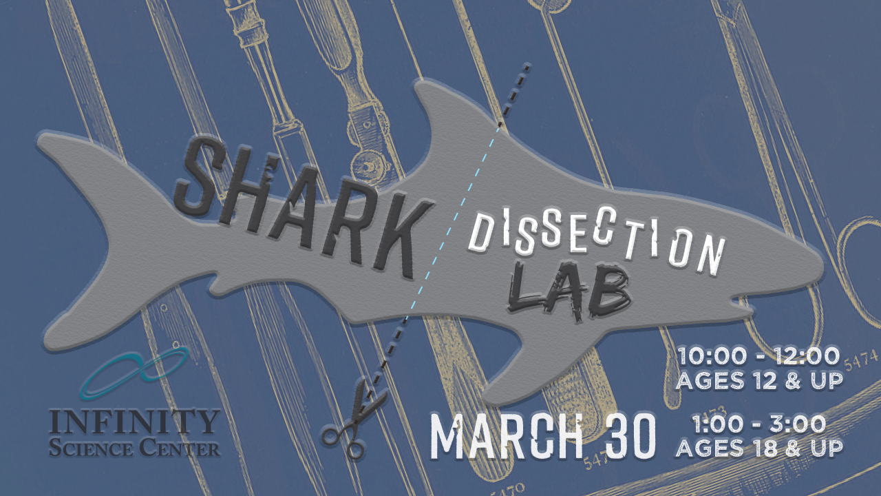 Shark Dissection Lab 10:00