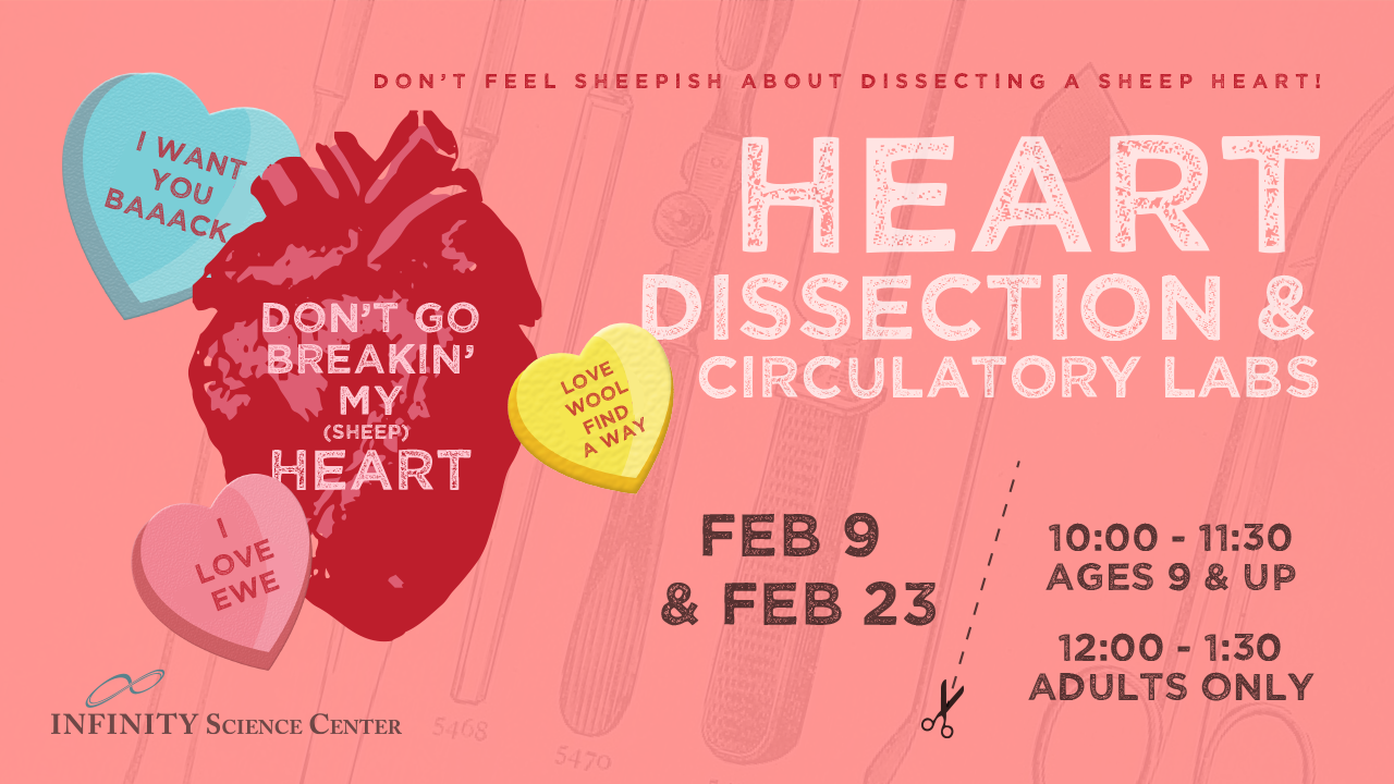 Heart Dissection Lab 10:00