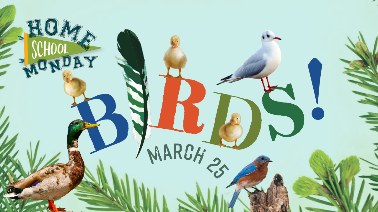 Homeschool Monday: Birds