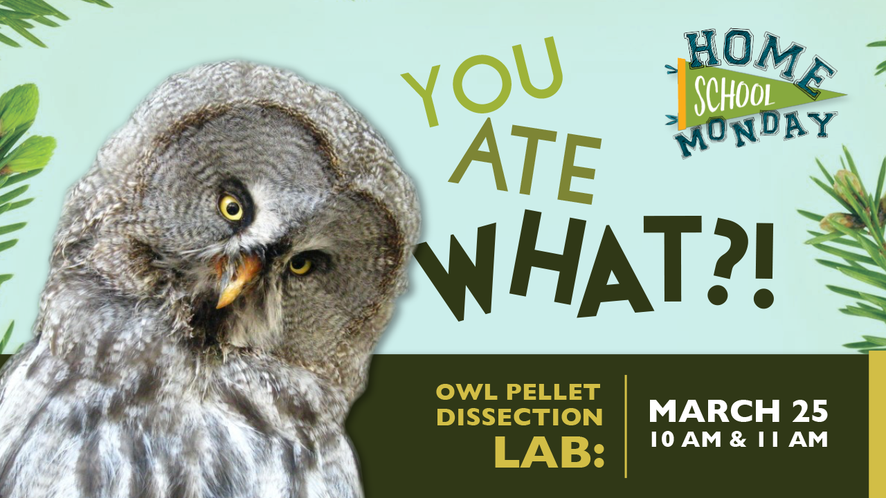 Owl Pellet Dissection 11:00: Homeschool Monday