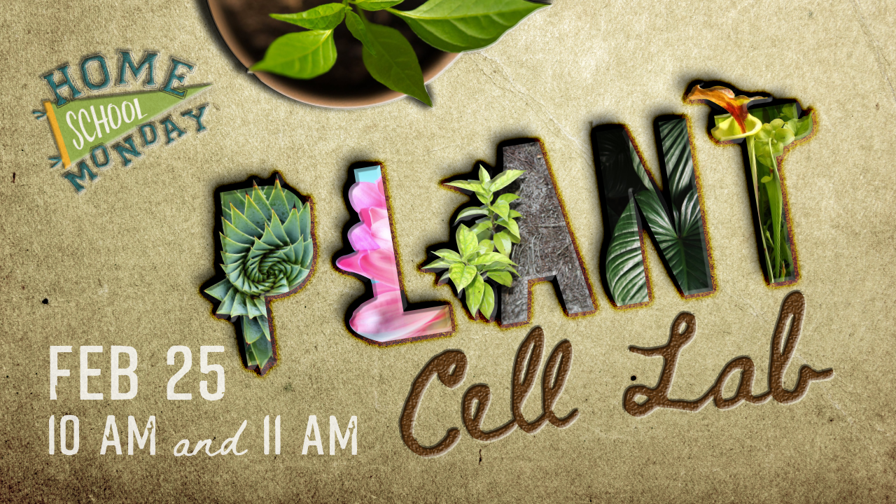 Plant Cell Lab 11:00: Homeschool Monday