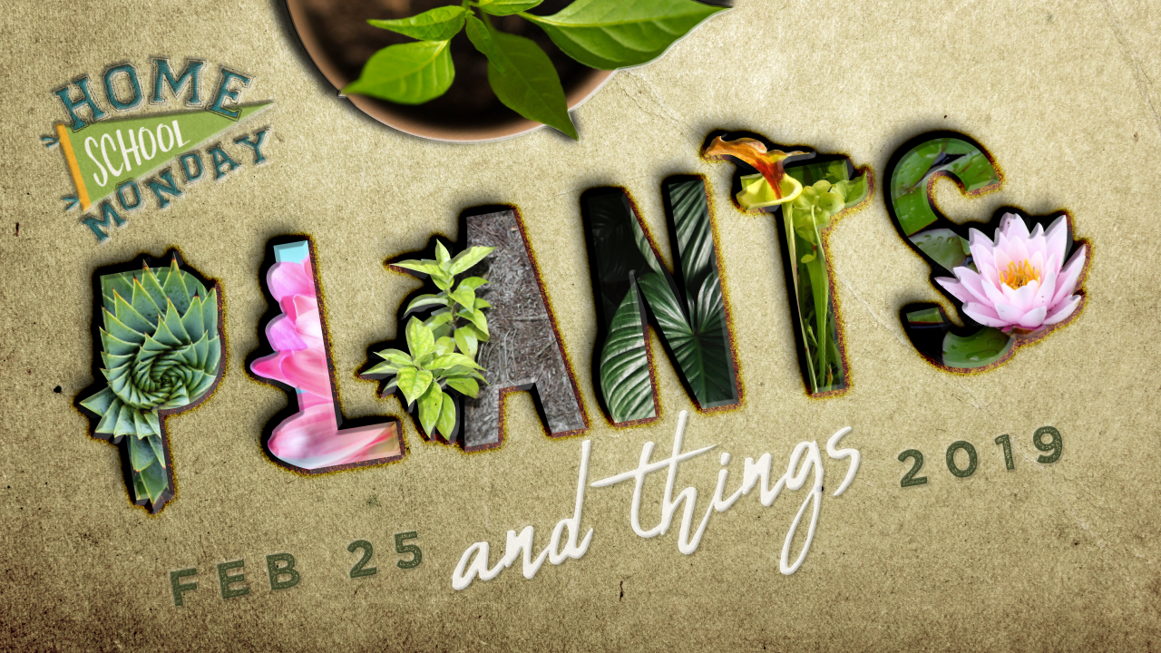 Homeschool Monday: Plants and Things